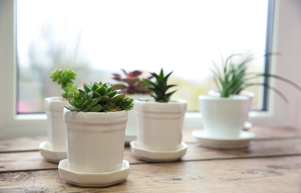 Cooped Up? Simple Ways to Increase Your Home's Air Quality.